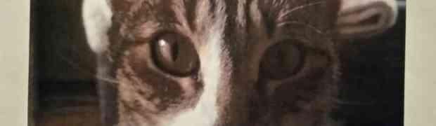 Katze vermisst + gefunden